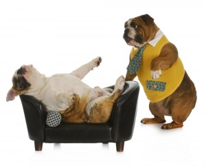 Bulldog-therapy-300x241